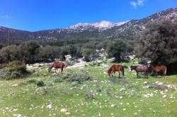 horses of Rapsana